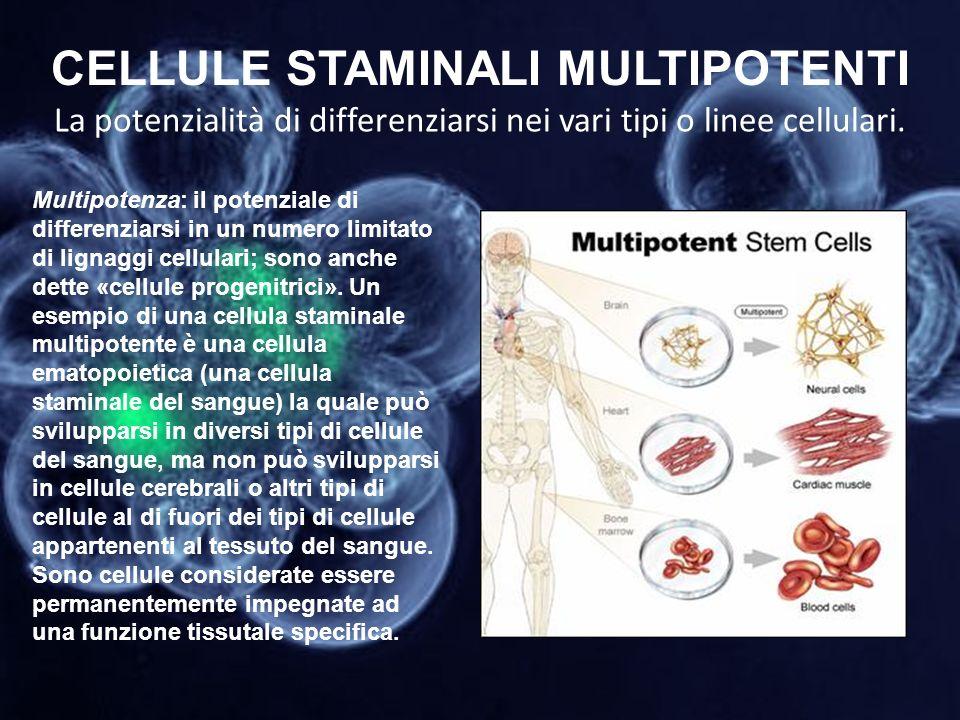 CELLULE STAMINALI MULTIPOTENTI La potenzialità di differenziarsi nei vari tipi o linee cellulari. Multipotenza: il potenziale di differenziarsi in un