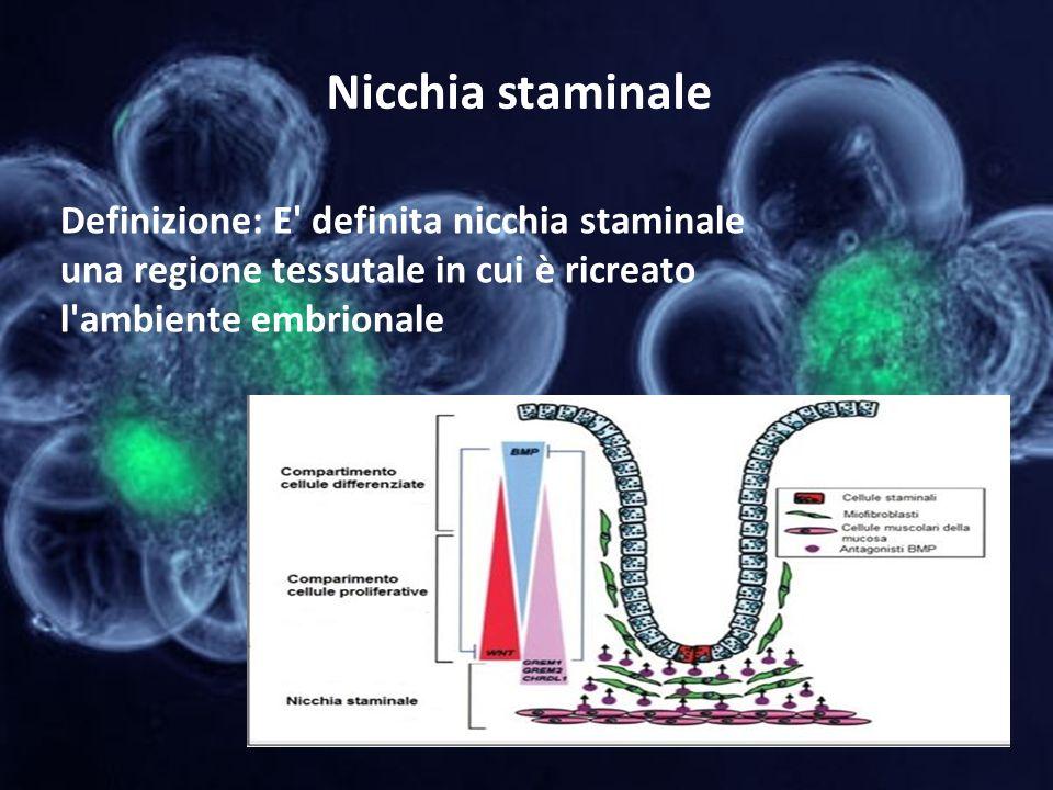 Nicchia staminale Definizione: E' definita nicchia staminale una regione tessutale in cui è ricreato l'ambiente embrionale