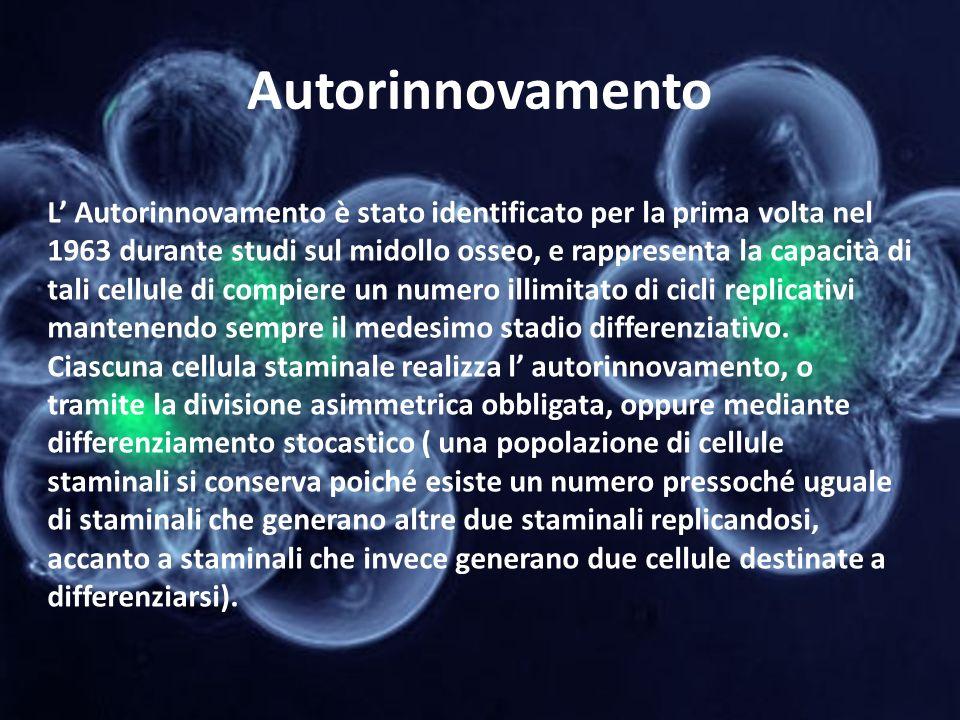 Autorinnovamento L Autorinnovamento è stato identificato per la prima volta nel 1963 durante studi sul midollo osseo, e rappresenta la capacità di tal