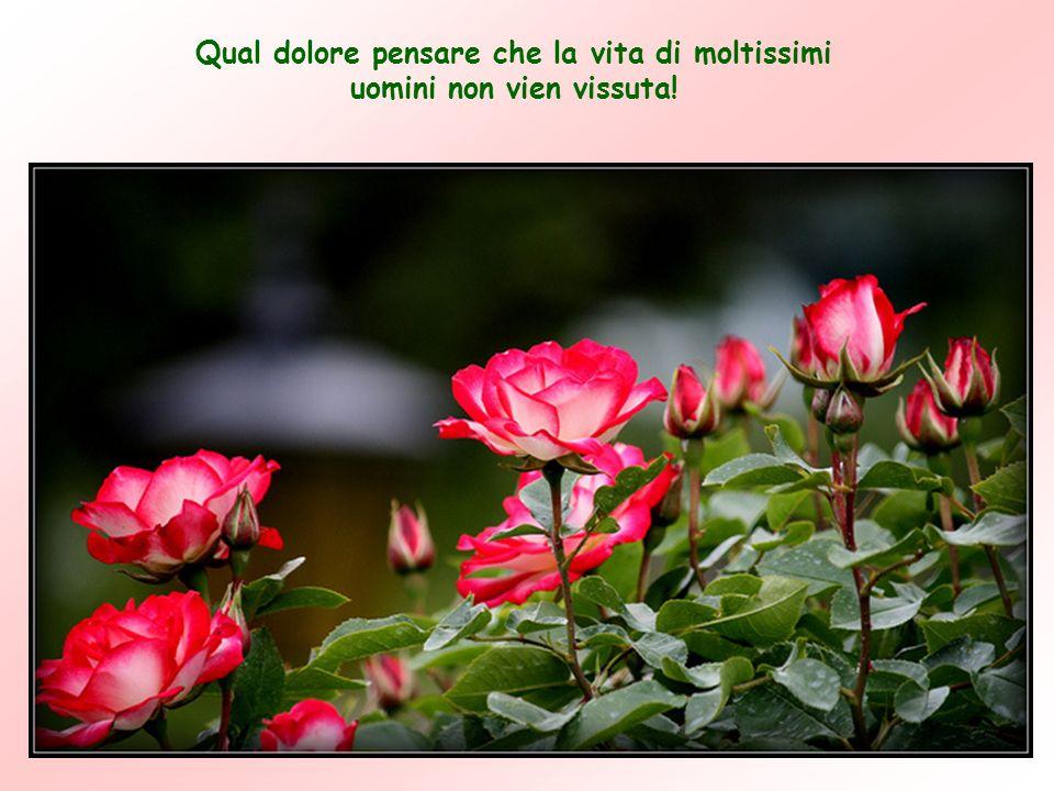 Dagli scritti Spirituali vol.1 Di Chiara Lubich – elaborato da Anna Lollo www.ppsmeditazionipreghiere.org Non c'è spina senza rosa