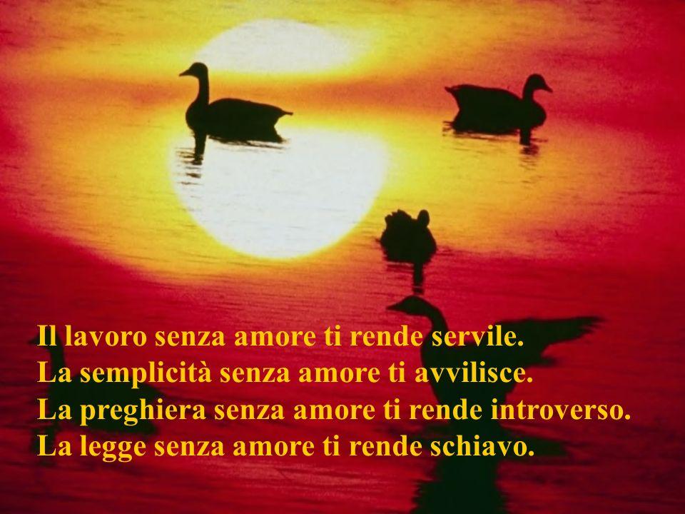 La docilità senza amore ti rende servile. La povertà senza amore ti rende orgoglioso. La verità senza amore ti rende offensivo. Lautorità senza amore
