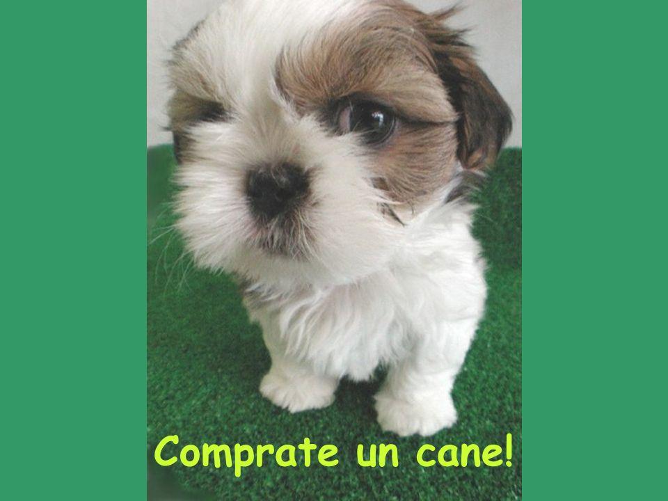 Comprate un cane!