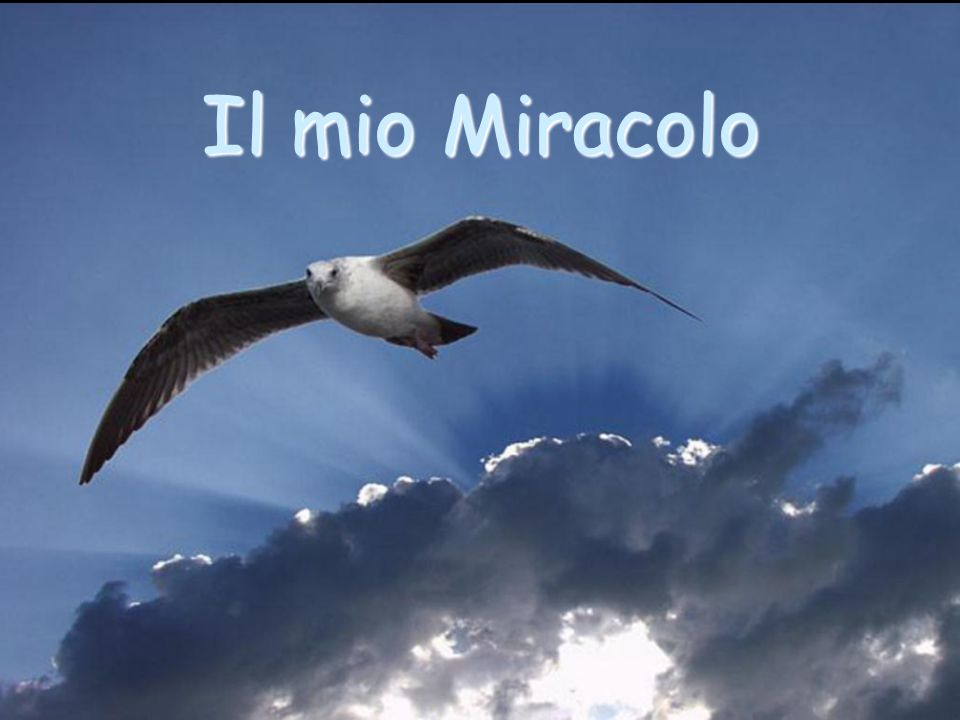 Il mio Miracolo