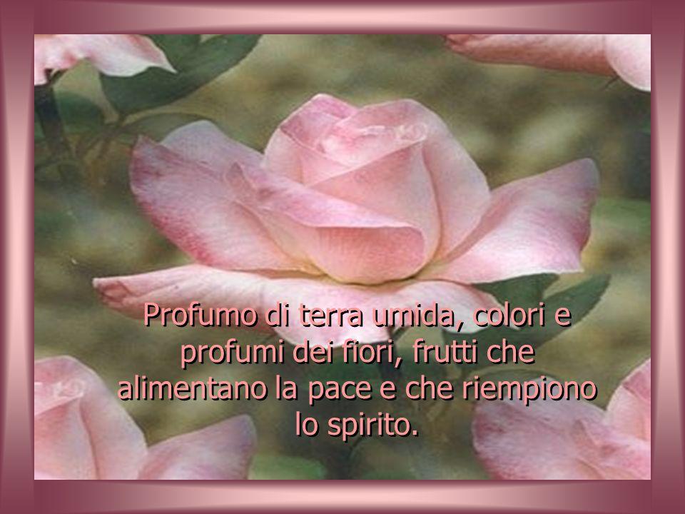 mantieni il tuo giardino della vita sempre pulito, coltiva i fiori (ottimismo), irriga con buon umore, spargi i semi (carità) in tutti i giardini e ri