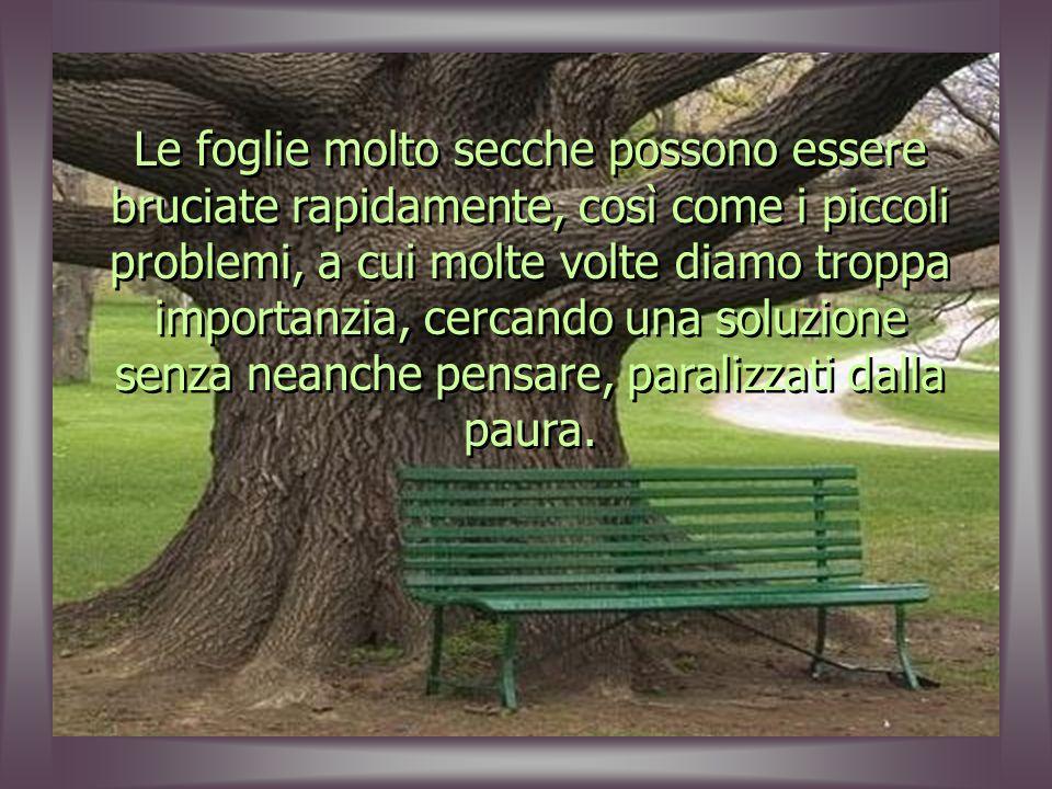 Insieme alle foglie giornaliere, cerchiamo di risolvere i problemi, rimuovendo quello que non serve più, separando ciò che è importante da ciò che non