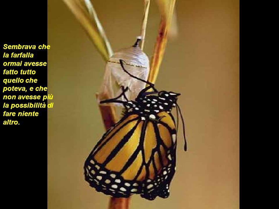 Allora luomo decise di aiutare la farfalla: prese un temperino ed aprì il bozzolo.