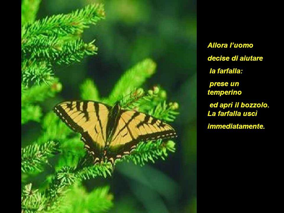 Allora luomo decise di aiutare la farfalla: prese un temperino ed aprì il bozzolo. La farfalla uscì immediatamente.