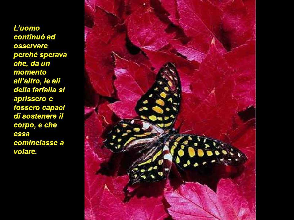 Luomo continuò ad osservare perché sperava che, da un momento allaltro, le ali della farfalla si aprissero e fossero capaci di sostenere il corpo, e c