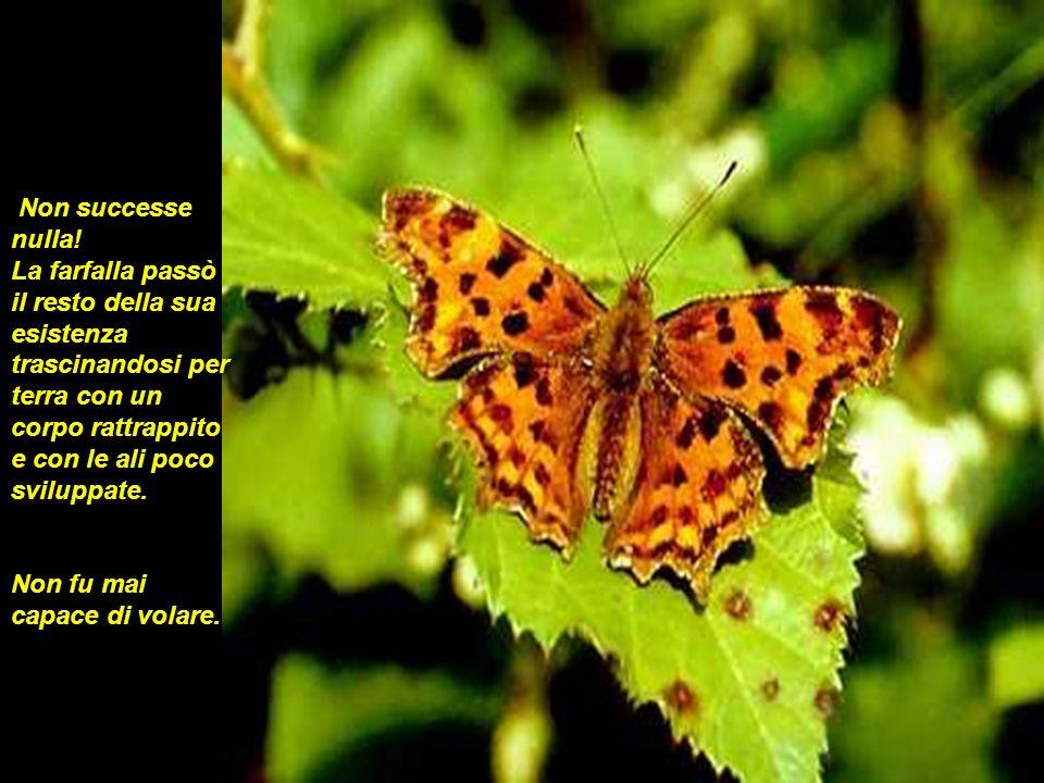 Ciò che quelluomo, con il suo gesto di gentilezza e con lintenzione di aiutare non capiva, era che passare per lo stretto buco del bozzolo era lo sforzo necessario affinché la farfalla potesse trasmettere il fluido del suo corpo alle sue ali, così che essa potesse volare.