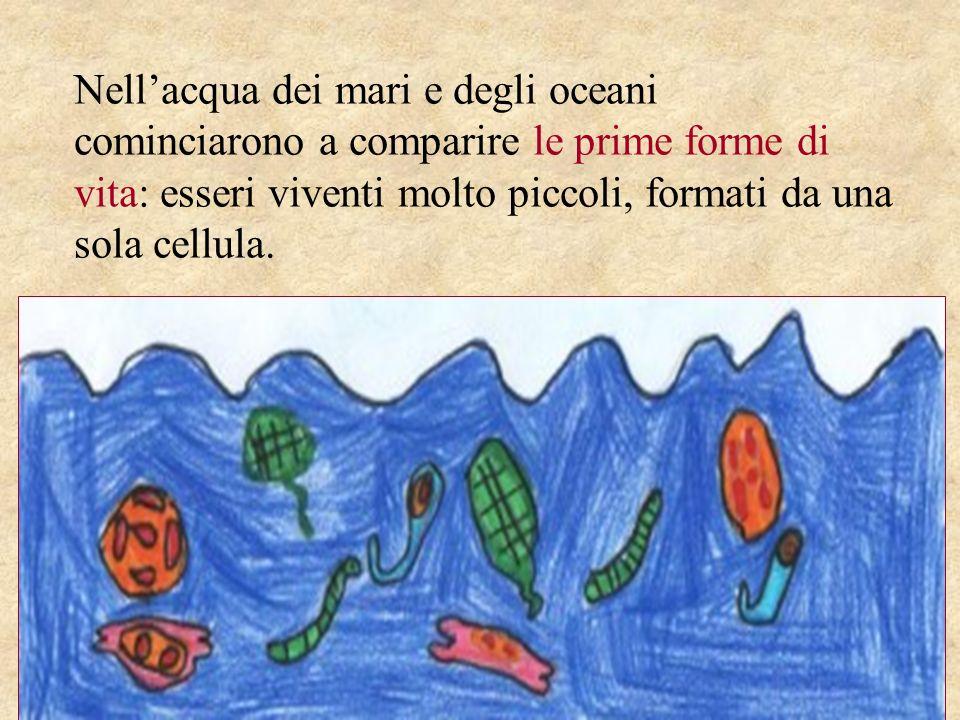 Nellacqua dei mari e degli oceani cominciarono a comparire le prime forme di vita: esseri viventi molto piccoli, formati da una sola cellula.