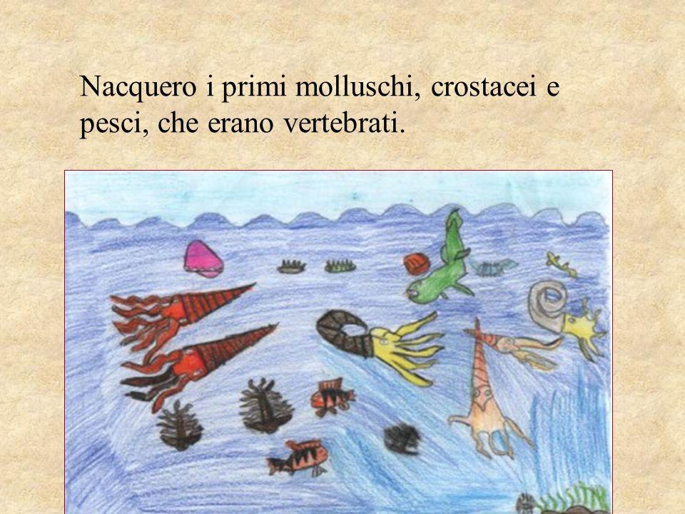 Nacquero i primi molluschi, crostacei e pesci, che erano vertebrati.