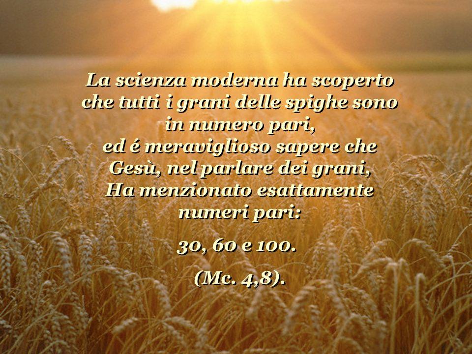 La scienza moderna ha scoperto che tutti i grani delle spighe sono in numero pari, ed é meraviglioso sapere che Gesù, nel parlare dei grani, Ha menzionato esattamente numeri pari: 30, 60 e 100.