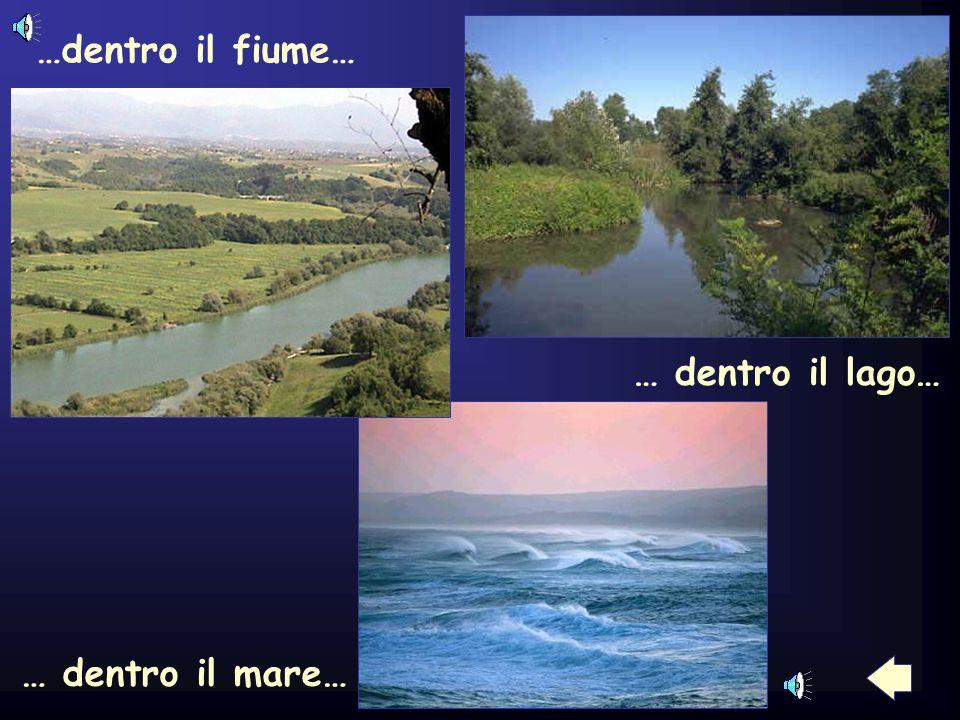 …dentro il fiume… … dentro il lago… … dentro il mare…