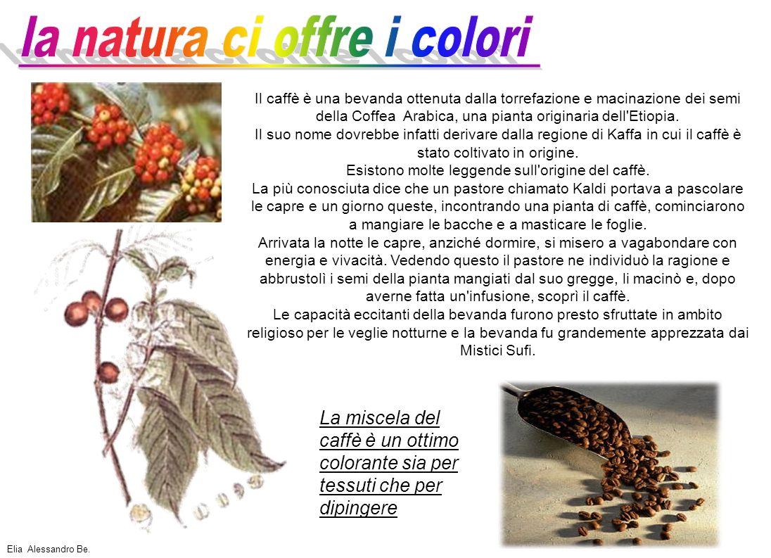 Lo spinacio è una pianta erbacea che non cresce spontaneamente in Italia.