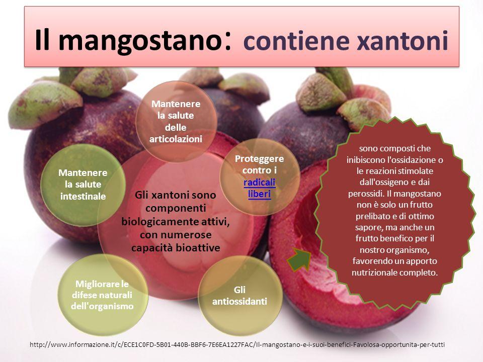 Il mangostano : contiene xantoni Gli xantoni sono componenti biologicamente attivi, con numerose capacità bioattive Mantenere la salute delle articolazioni Proteggere contro i radicali liberi radicali liberi Gli antiossidanti Migliorare le difese naturali dell organismo Mantenere la salute intestinale http://www.informazione.it/c/ECE1C0FD-5B01-440B-BBF6-7E6EA1227FAC/Il-mangostano-e-i-suoi-benefici-Favolosa-opportunita-per-tutti sono composti che inibiscono l ossidazione o le reazioni stimolate dall ossigeno e dai perossidi.