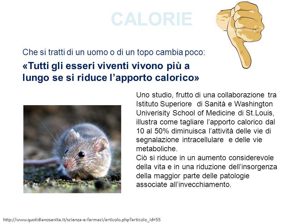 CALORIE Che si tratti di un uomo o di un topo cambia poco: «Tutti gli esseri viventi vivono più a lungo se si riduce lapporto calorico» Uno studio, fr