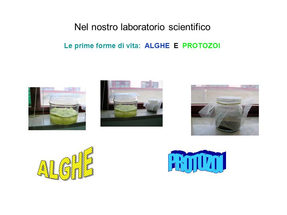 Nel nostro laboratorio scientifico Le prime forme di vita: ALGHE E PROTOZOI