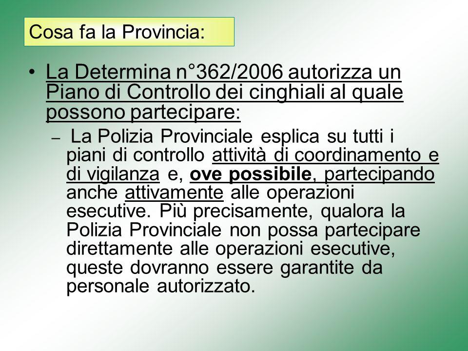 La Determina n°362/2006 autorizza un Piano di Controllo dei cinghiali al quale possono partecipare : – La Polizia Provinciale esplica su tutti i piani di controllo attività di coordinamento e di vigilanza e, ove possibile, partecipando anche attivamente alle operazioni esecutive.