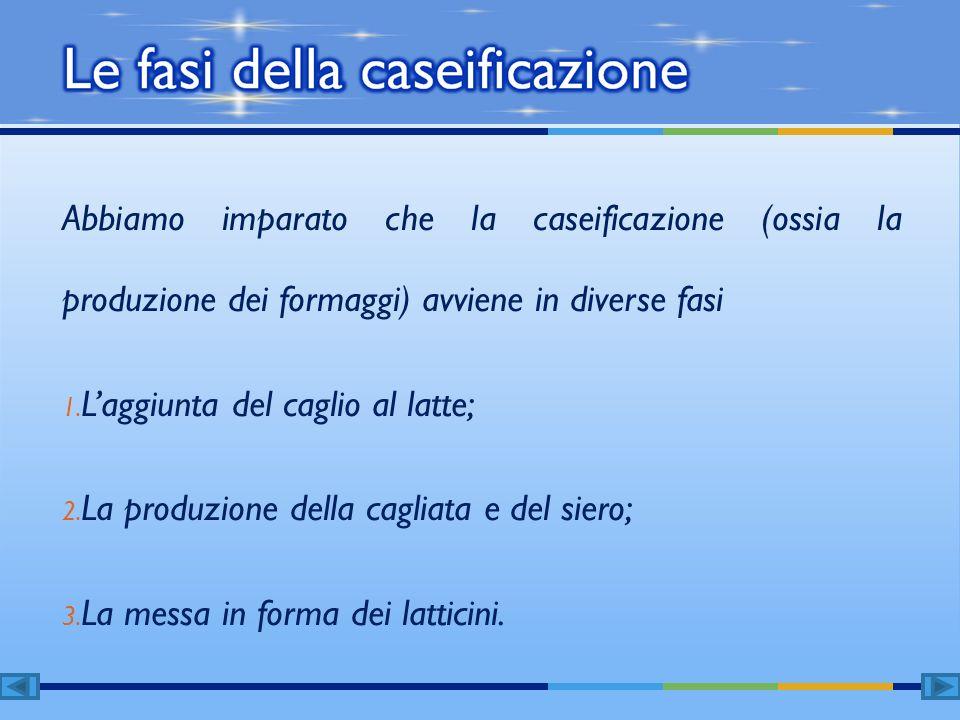 Abbiamo imparato che la caseificazione (ossia la produzione dei formaggi) avviene in diverse fasi 1.