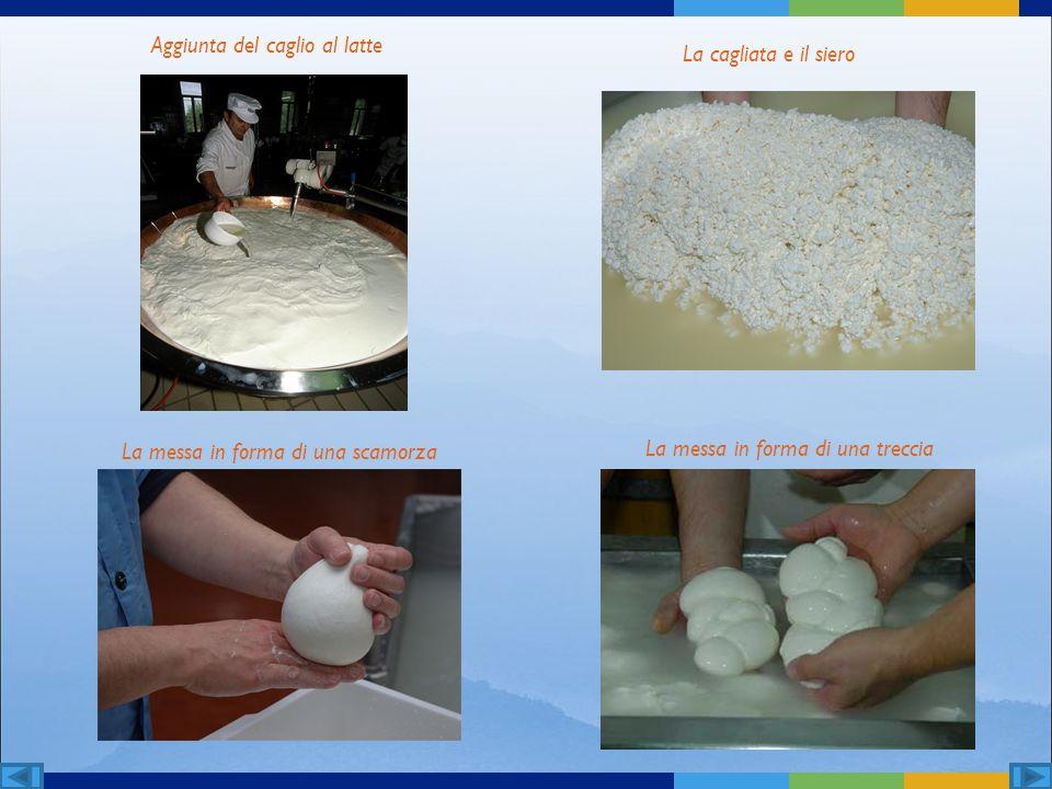 Aggiunta del caglio al latte La cagliata e il siero La messa in forma di una scamorza La messa in forma di una treccia
