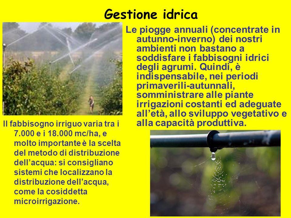 Gestione idrica Le piogge annuali (concentrate in autunno-inverno) dei nostri ambienti non bastano a soddisfare i fabbisogni idrici degli agrumi. Quin