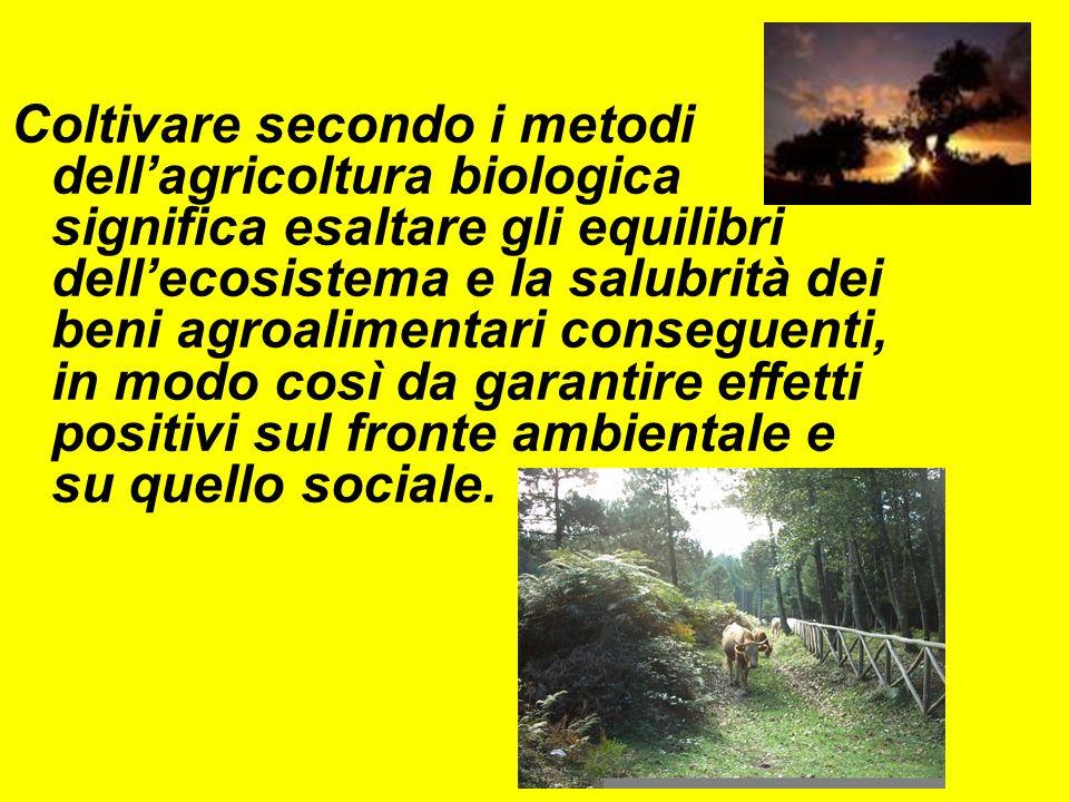 Coltivare secondo i metodi dellagricoltura biologica significa esaltare gli equilibri dellecosistema e la salubrità dei beni agroalimentari conseguenti, in modo così da garantire effetti positivi sul fronte ambientale e su quello sociale.