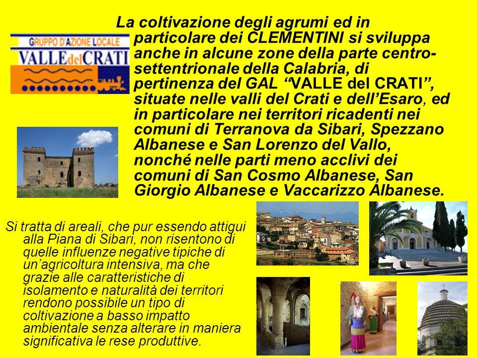 La coltivazione degli agrumi ed in particolare dei CLEMENTINI si sviluppa anche in alcune zone della parte centro- settentrionale della Calabria, di pertinenza del GAL VALLE del CRATI, situate nelle valli del Crati e dellEsaro, ed in particolare nei territori ricadenti nei comuni di Terranova da Sibari, Spezzano Albanese e San Lorenzo del Vallo, nonché nelle parti meno acclivi dei comuni di San Cosmo Albanese, San Giorgio Albanese e Vaccarizzo Albanese.