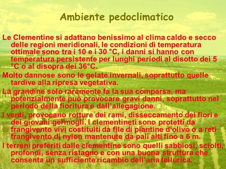 Ambiente pedoclimatico Le Clementine si adattano benissimo al clima caldo e secco delle regioni meridionali, le condizioni di temperatura ottimale sono tra i 10 e i 30 °C, i danni si hanno con temperatura persistente per lunghi periodi al disotto dei 5 °C o al disopra dei 36°C.