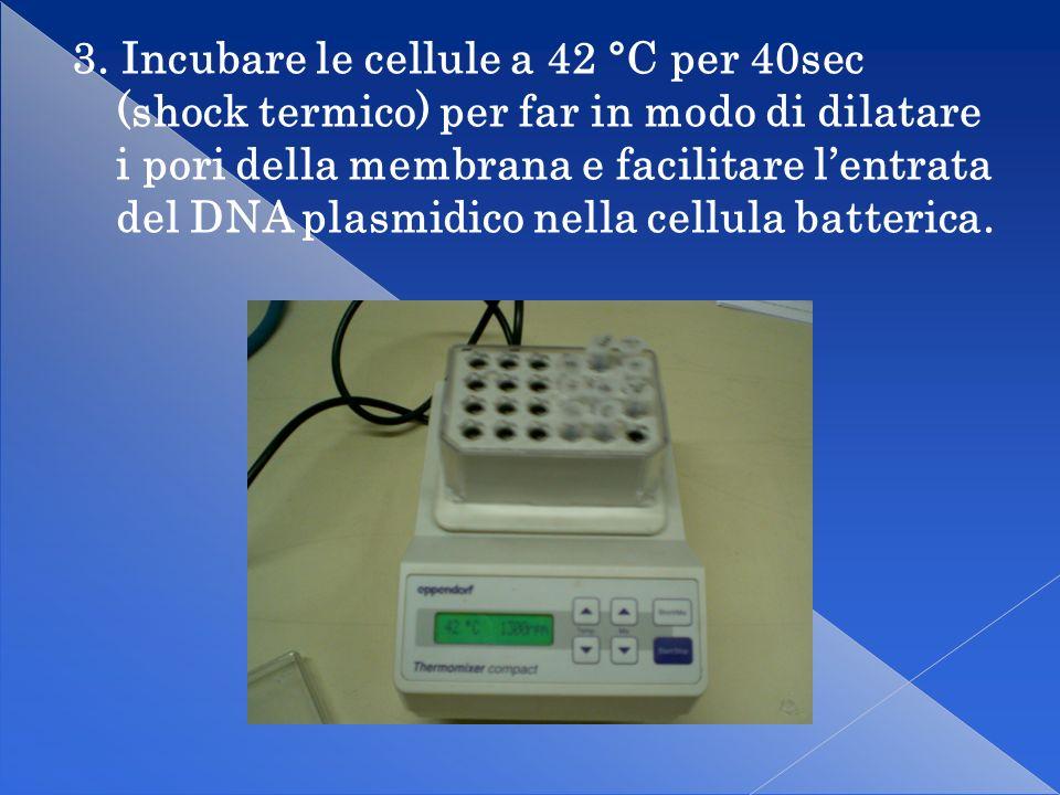 4. Incubare le cellule in ghiaccio per 2min in modo tale da richiudere i pori della membrana.
