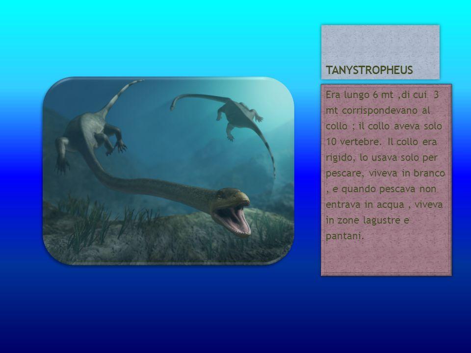 Era lungo 6 mt,di cui 3 mt corrispondevano al collo ; il collo aveva solo 10 vertebre. Il collo era rigido, lo usava solo per pescare, viveva in branc