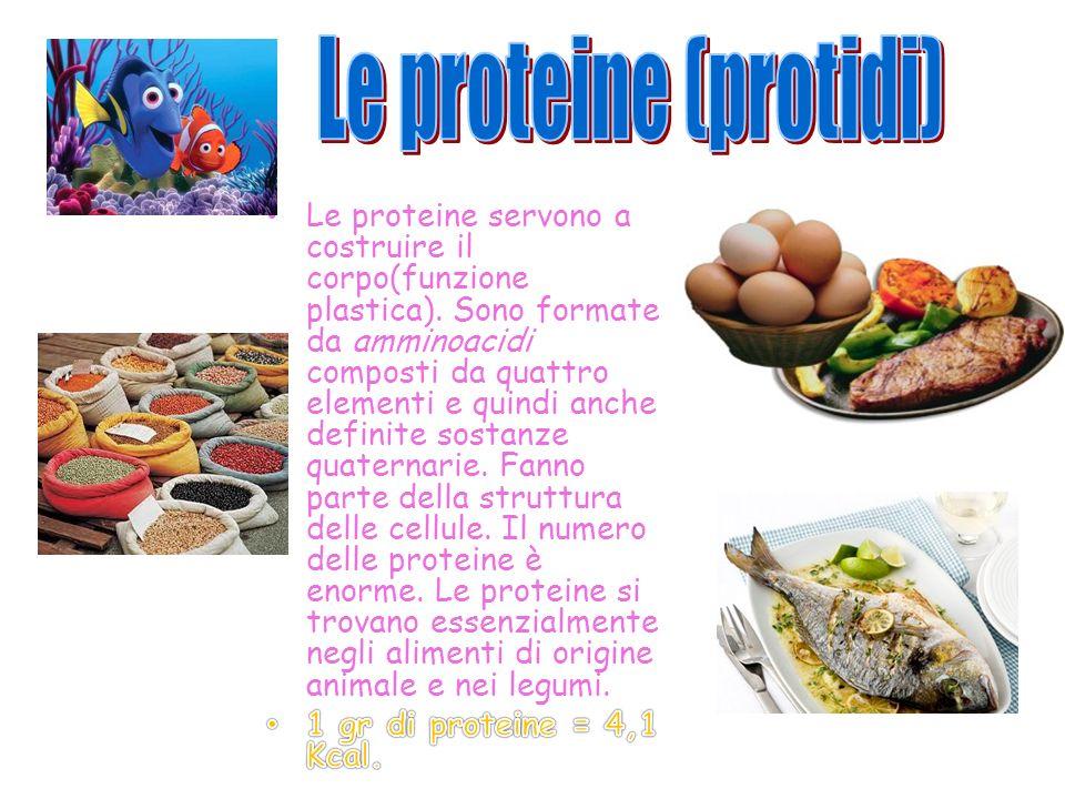 Le vitamine forniscono molte funzioni del nostro organismo.