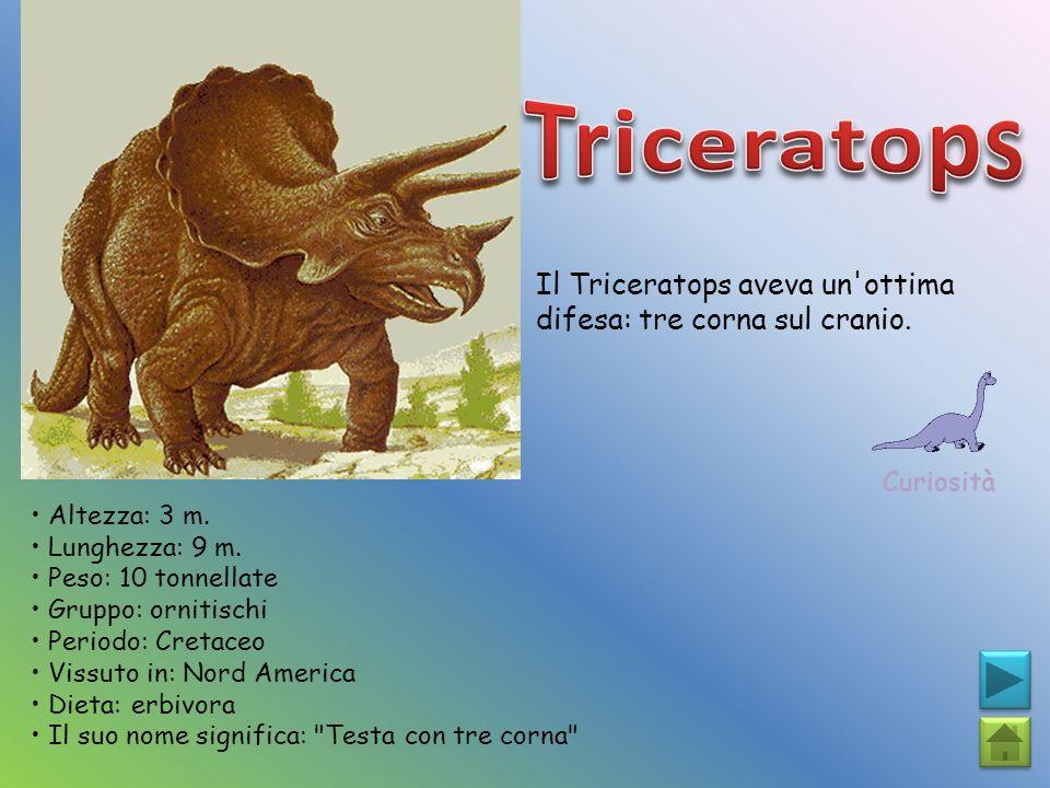 Il Triceratops aveva un'ottima difesa: tre corna sul cranio. Curiosità Altezza: 3 m. Lunghezza: 9 m. Peso: 10 tonnellate Gruppo: ornitischi Periodo: C