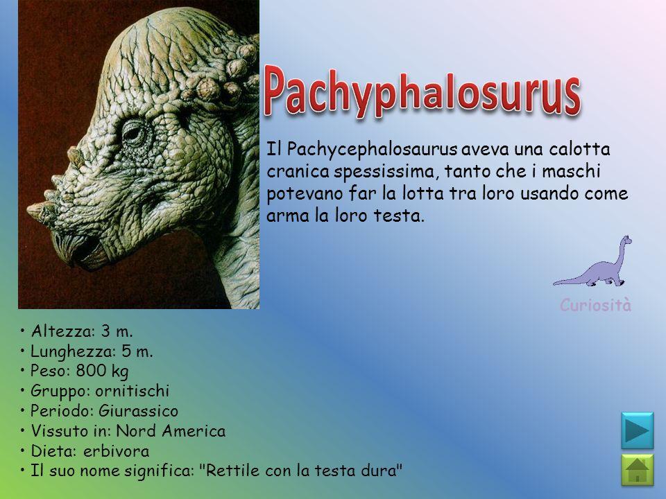 Il Pachycephalosaurus aveva una calotta cranica spessissima, tanto che i maschi potevano far la lotta tra loro usando come arma la loro testa. Curiosi