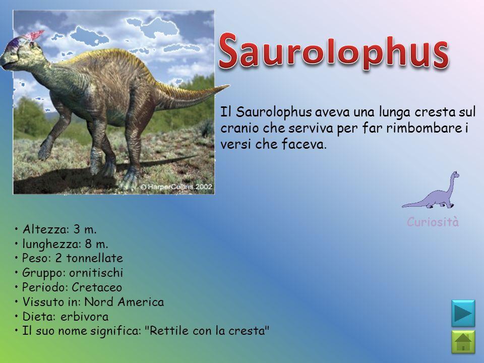 Il Saurolophus aveva una lunga cresta sul cranio che serviva per far rimbombare i versi che faceva. Curiosità Altezza: 3 m. lunghezza: 8 m. Peso: 2 to