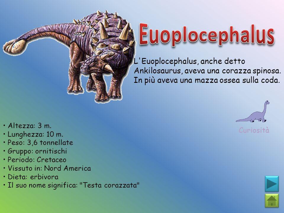 L'Euoplocephalus, anche detto Ankilosaurus, aveva una corazza spinosa. In più aveva una mazza ossea sulla coda. Curiosità Altezza: 3 m. Lunghezza: 10
