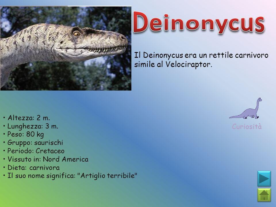 Il Deinonycus era un rettile carnivoro simile al Velociraptor. Curiosità Altezza: 2 m. Lunghezza: 3 m. Peso: 80 kg Gruppo: saurischi Periodo: Cretaceo