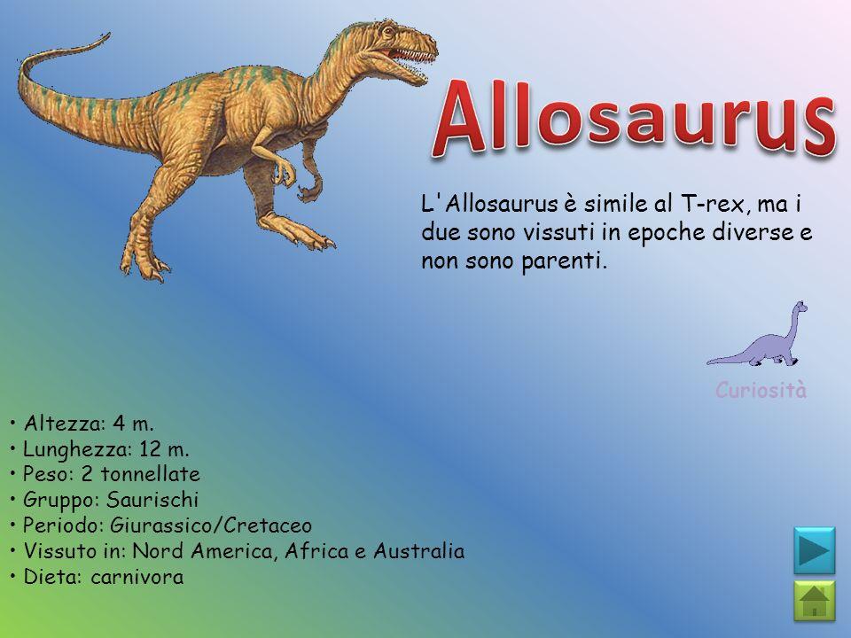 L'Allosaurus è simile al T-rex, ma i due sono vissuti in epoche diverse e non sono parenti. Curiosità Altezza: 4 m. Lunghezza: 12 m. Peso: 2 tonnellat