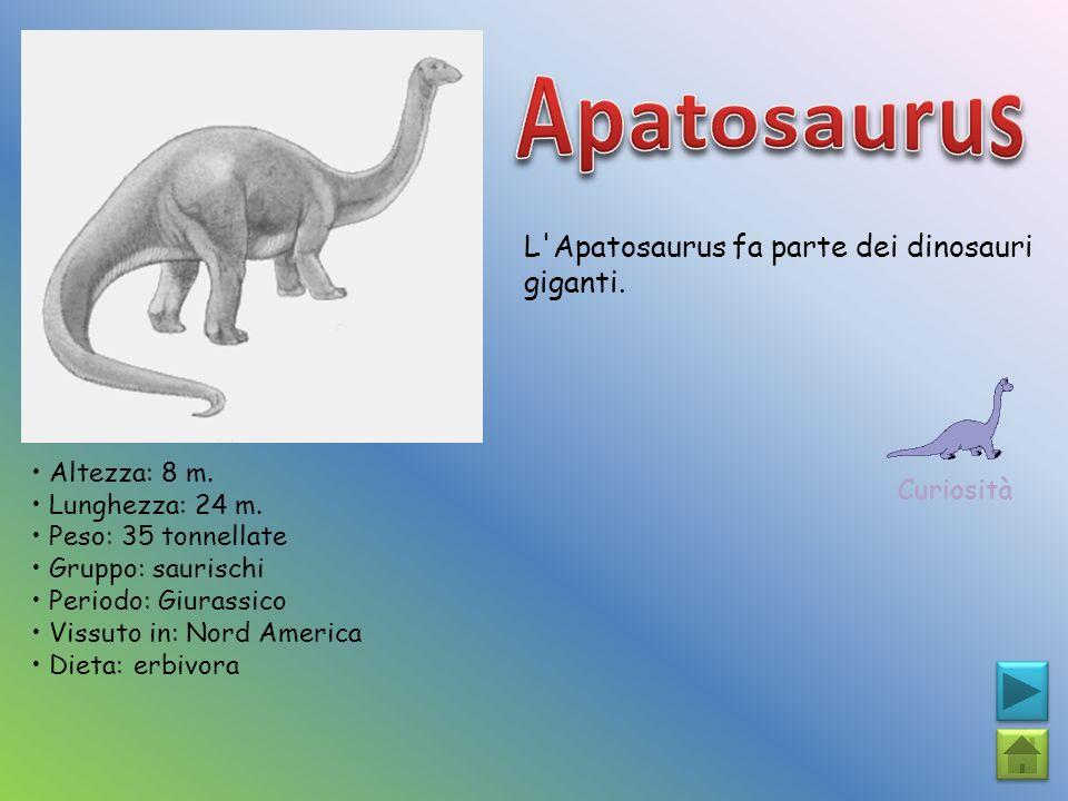 L'Apatosaurus fa parte dei dinosauri giganti. Curiosità Altezza: 8 m. Lunghezza: 24 m. Peso: 35 tonnellate Gruppo: saurischi Periodo: Giurassico Vissu