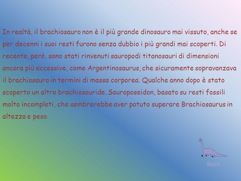In realtà, il brachiosauro non è il più grande dinosauro mai vissuto, anche se per decenni i suoi resti furono senza dubbio i più grandi mai scoperti.