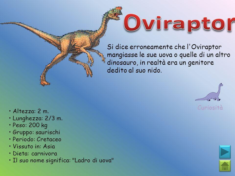 Si dice erroneamente che l'Oviraptor mangiasse le sue uova o quelle di un altro dinosauro, in realtà era un genitore dedito al suo nido. Curiosità Alt