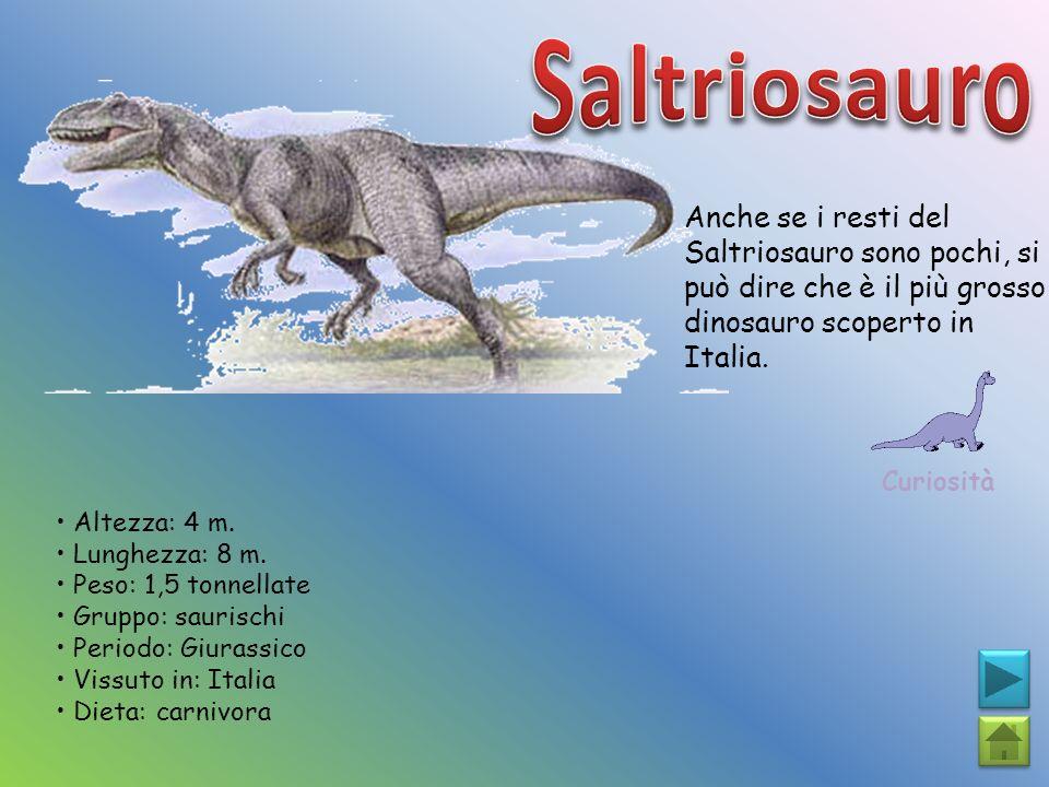 Anche se i resti del Saltriosauro sono pochi, si può dire che è il più grosso dinosauro scoperto in Italia. Curiosità Altezza: 4 m. Lunghezza: 8 m. Pe