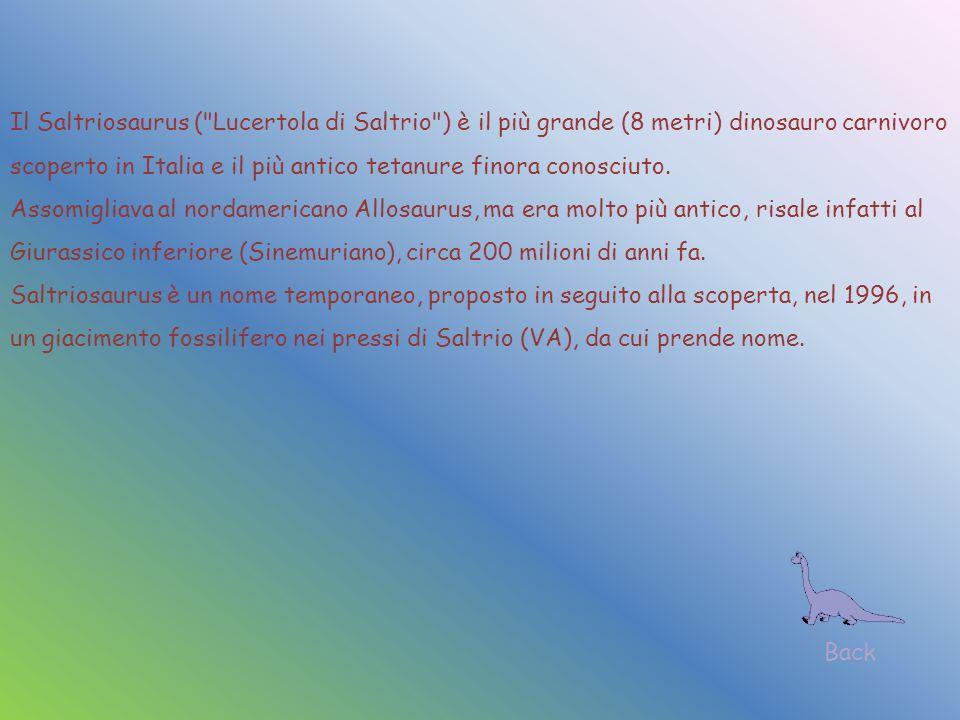 Il Saltriosaurus (