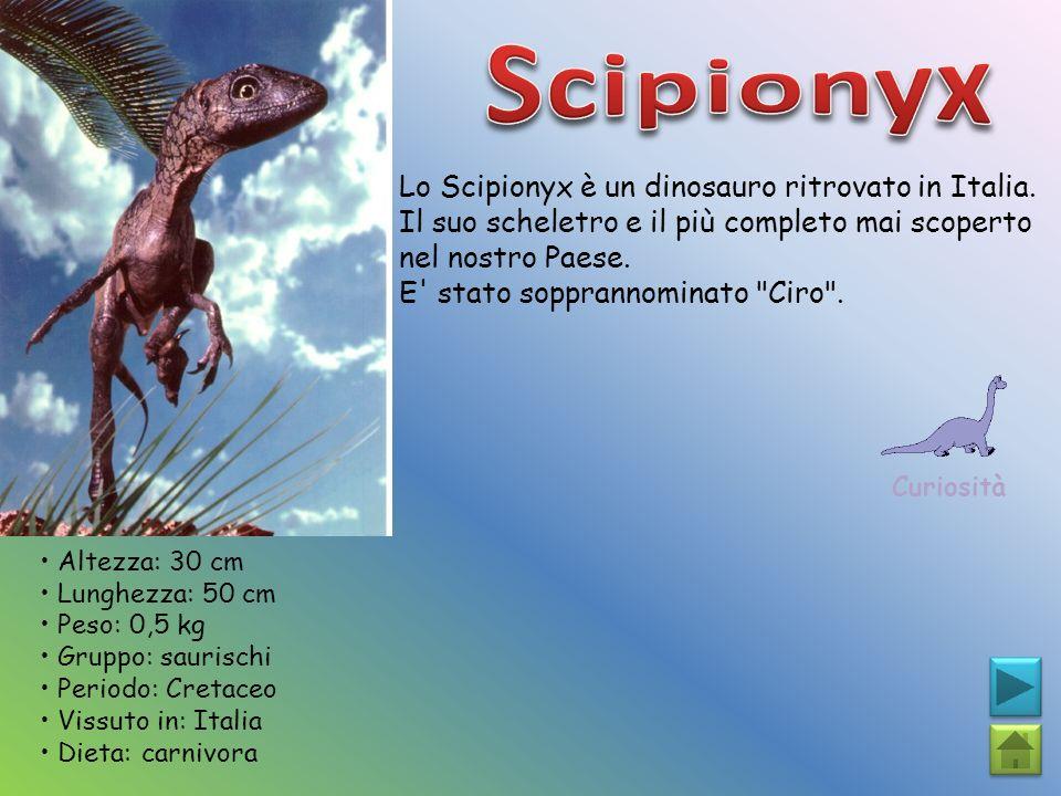 Lo Scipionyx è un dinosauro ritrovato in Italia. Il suo scheletro e il più completo mai scoperto nel nostro Paese. E' stato sopprannominato