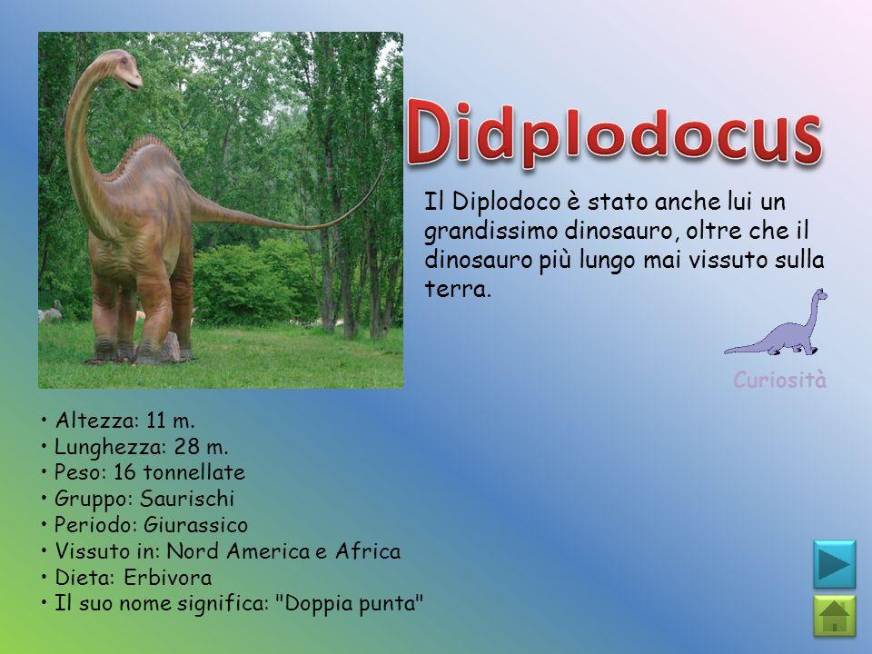 Il Diplodoco è stato anche lui un grandissimo dinosauro, oltre che il dinosauro più lungo mai vissuto sulla terra. Curiosità Altezza: 11 m. Lunghezza: