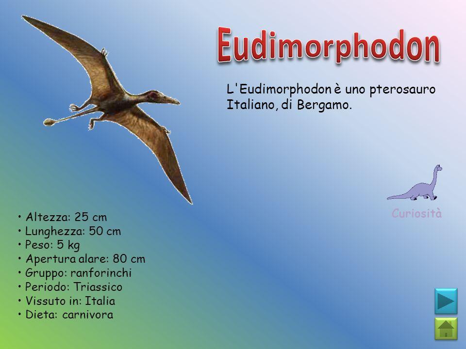 L'Eudimorphodon è uno pterosauro Italiano, di Bergamo. Curiosità Altezza: 25 cm Lunghezza: 50 cm Peso: 5 kg Apertura alare: 80 cm Gruppo: ranforinchi