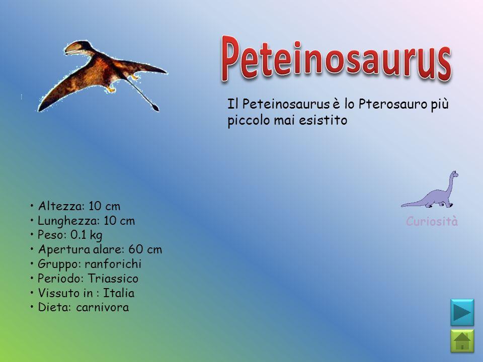 Il Peteinosaurus è lo Pterosauro più piccolo mai esistito Curiosità Altezza: 10 cm Lunghezza: 10 cm Peso: 0.1 kg Apertura alare: 60 cm Gruppo: ranfori