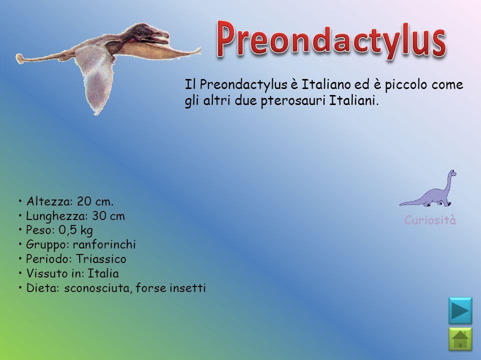 Il Preondactylus è Italiano ed è piccolo come gli altri due pterosauri Italiani. Curiosità Altezza: 20 cm. Lunghezza: 30 cm Peso: 0,5 kg Gruppo: ranfo