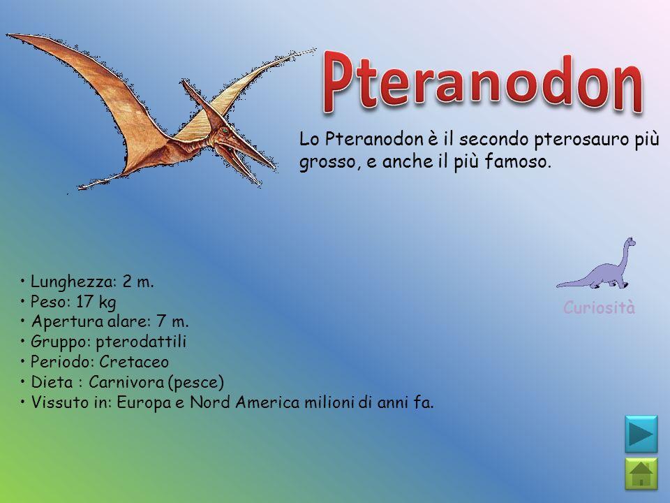 Lo Pteranodon è il secondo pterosauro più grosso, e anche il più famoso. Curiosità Lunghezza: 2 m. Peso: 17 kg Apertura alare: 7 m. Gruppo: pterodatti