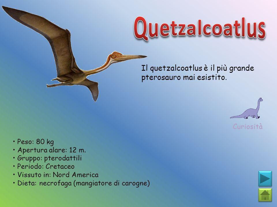 Il quetzalcoatlus è il più grande pterosauro mai esistito. Curiosità Peso: 80 kg Apertura alare: 12 m. Gruppo: pterodattili Periodo: Cretaceo Vissuto