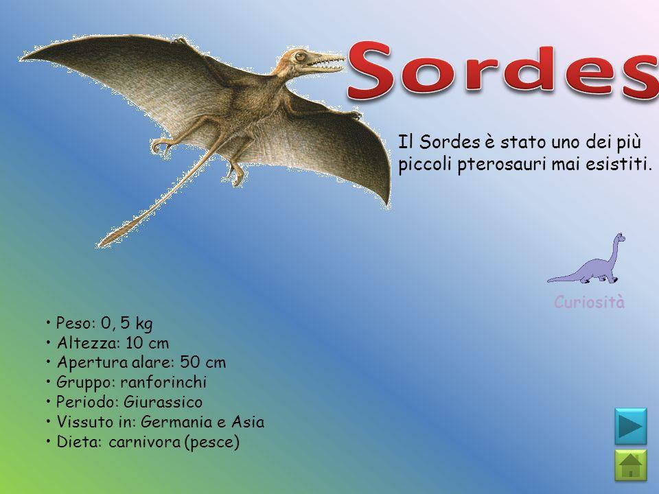 Il Sordes è stato uno dei più piccoli pterosauri mai esistiti. Curiosità Peso: 0, 5 kg Altezza: 10 cm Apertura alare: 50 cm Gruppo: ranforinchi Period